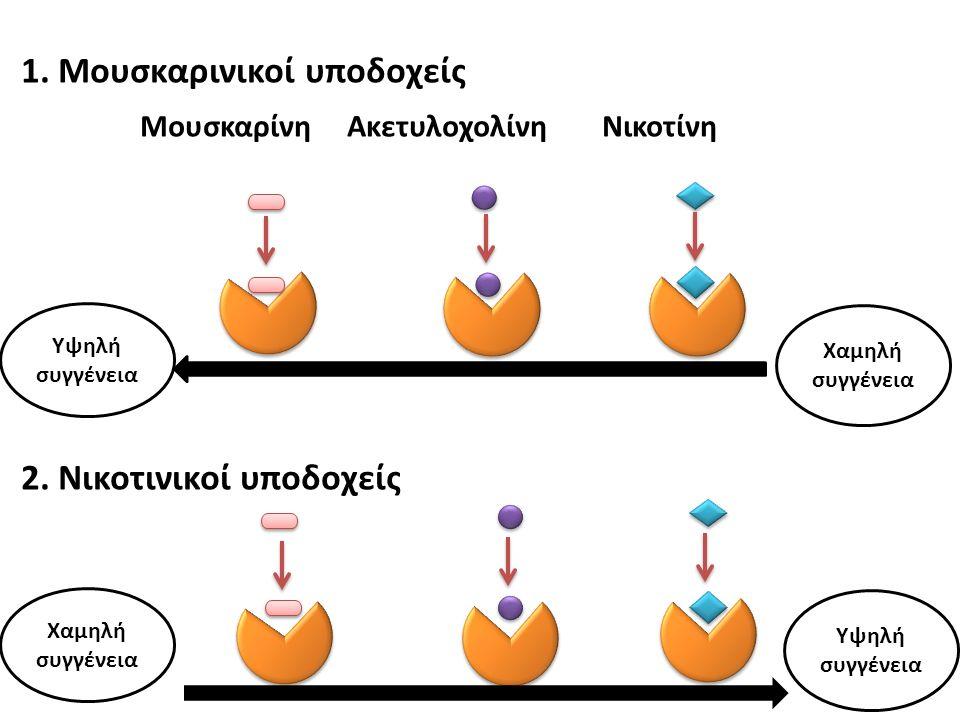 1. Μουσκαρινικοί υποδοχείς Μουσκαρίνη Ακετυλοχολίνη Νικοτίνη 2.