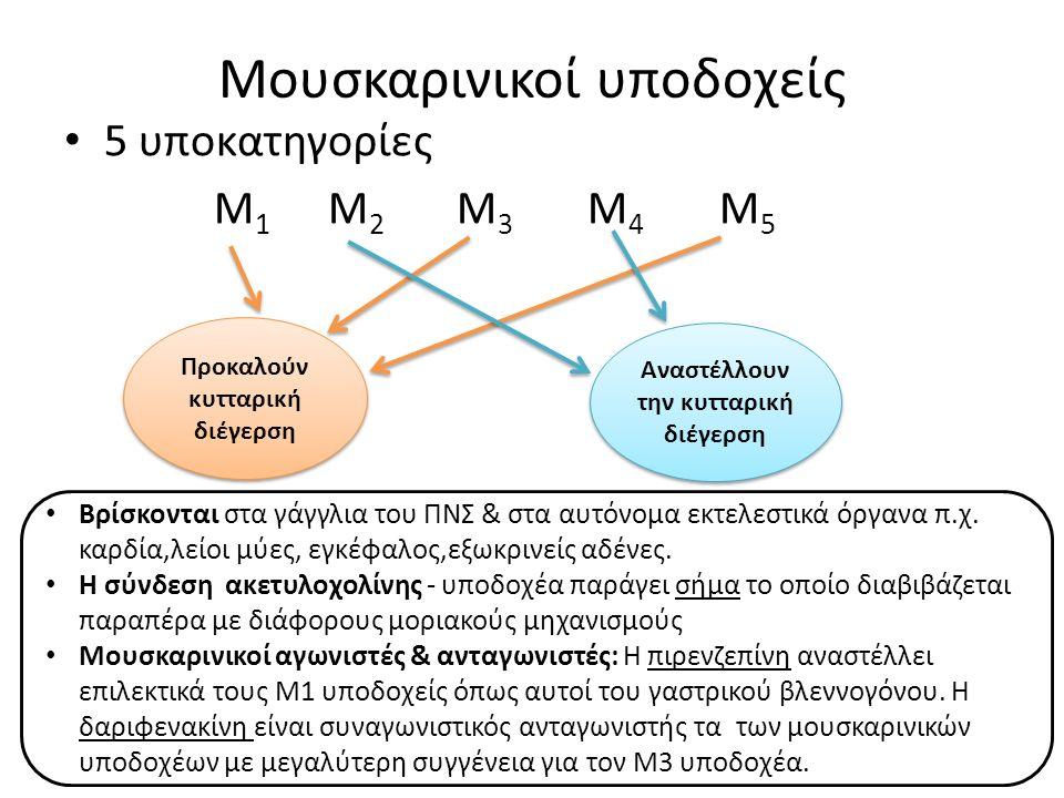 Μουσκαρινικοί υποδοχείς 5 υποκατηγορίες Μ 1 Μ 2 Μ 3 Μ 4 Μ 5 Προκαλούν κυτταρική διέγερση Αναστέλλουν την κυτταρική διέγερση Βρίσκονται στα γάγγλια του ΠΝΣ & στα αυτόνομα εκτελεστικά όργανα π.χ.