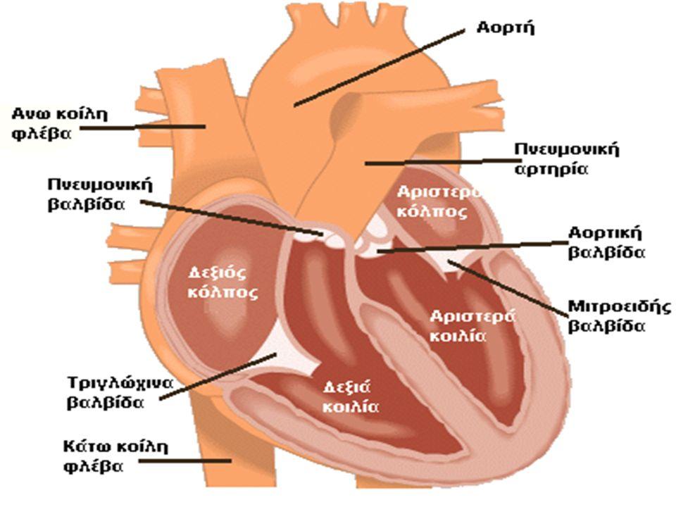 Μη κυανωτικές συγγενείς καρδιοπάθειες Μεσοκοιλιακή επικοινωνία  Είναι η πιο συχνή συγγενής καρδιοπάθεια.