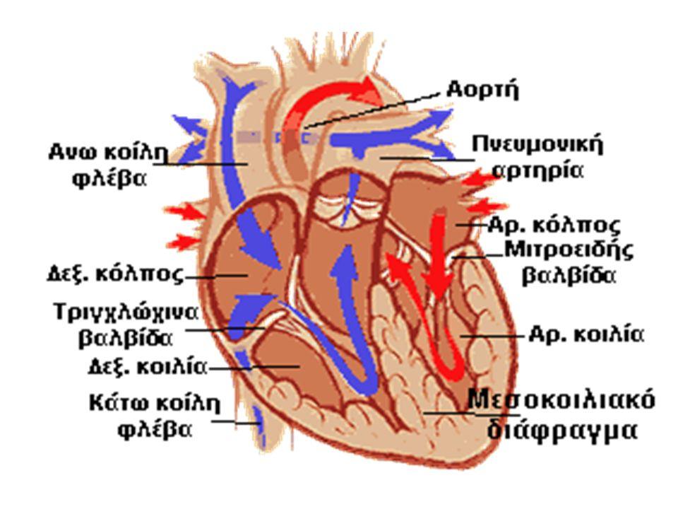 Μεσοκολπική επικοινωνία  Εντοπίζεται συνήθως στο πάνω μέρος του μεσοκολπικού διαφράγματος και πιο σπάνια στο κάτω μέρος.