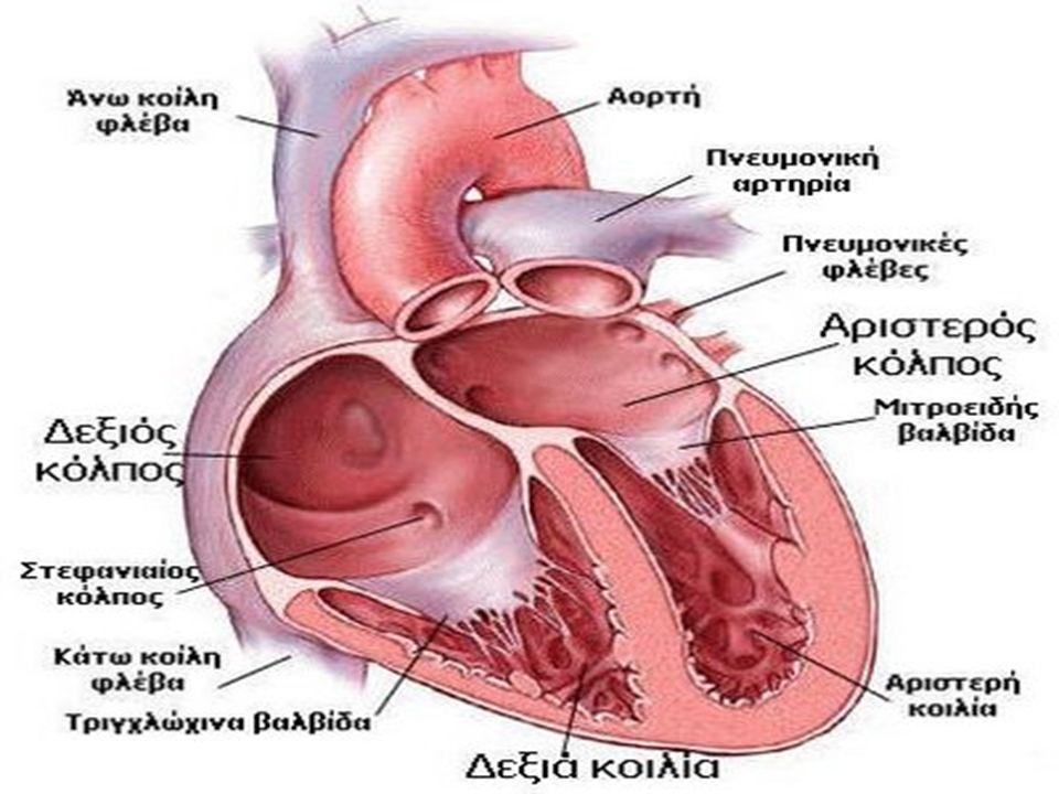 Παραμονή αρτηριακού πόρου  Κατά την ενδομήτρια ζωή ο αρτηριακός πόρος επιτρέπει τη ροή αίματος από την πνευμονική κυκλοφορία προς την αορτή.