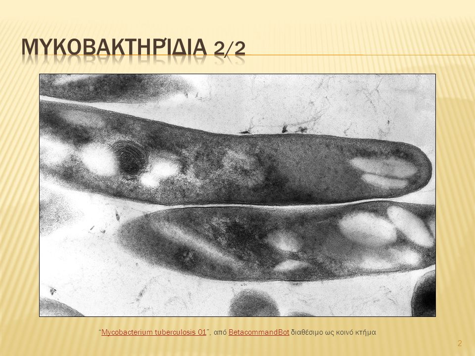  Ο Δρ.Ρόμπερτ Κοχ ανακάλυψε τον βάκιλο της φυματίωσης.