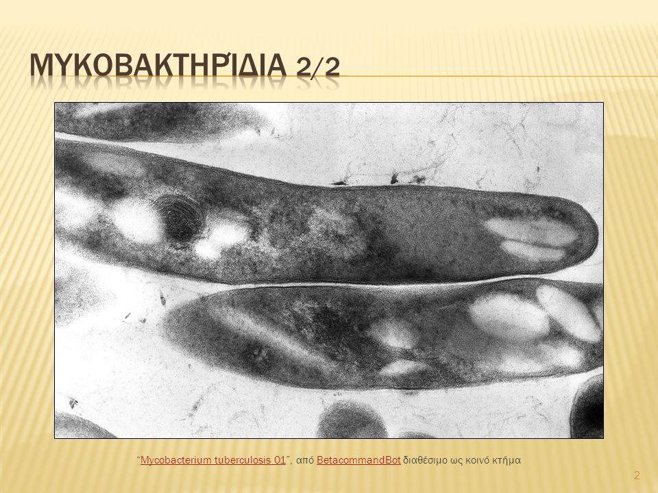 "2 ""Mycobacterium tuberculosis 01"", από BetacommandBot διαθέσιμο ως κοινό κτήμαMycobacterium tuberculosis 01BetacommandBot"