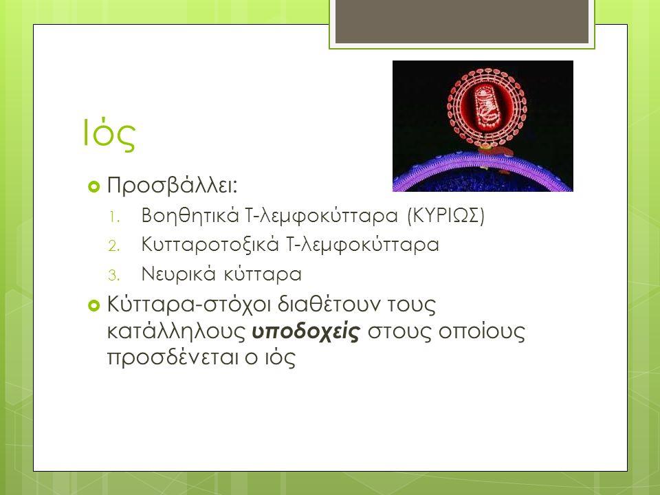 Ιός  Προσβάλλει: 1. Βοηθητικά Τ-λεμφοκύτταρα (ΚΥΡΙΩΣ) 2.