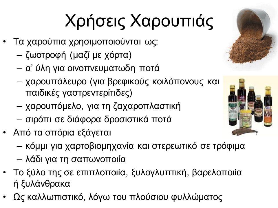 Χρήσεις Χαρουπιάς Τα χαρούπια χρησιμοποιούνται ως: –ζωοτροφή (μαζί με χόρτα) –α' ύλη για οινοπνευματωδη ποτά –χαρουπάλευρο (για βρεφικούς κοιλόπονους και παιδικές γαστρεντερίτιδες) –χαρουπόμελο, για τη ζαχαροπλαστική –σιρόπι σε διάφορα δροσιστικά ποτά Από τα σπόρια εξάγεται –κόμμι για χαρτοβιομηχανία και στερεωτικό σε τρόφιμα –λάδι για τη σαπωνοποιία Το ξύλο της σε επιπλοποιία, ξυλογλυπτική, βαρελοποιία ή ξυλάνθρακα Ως καλλωπιστικό, λόγω του πλούσιου φυλλώματος