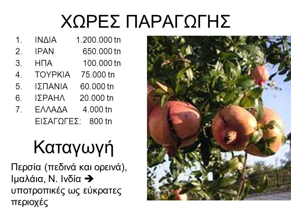 Κλιματικές απαιτήσεις Όπου η ελάχιστη θερμοκρασία το χειμώνα >-8 ο C (αντέχει στο κρύο όσο και η ελιά) Σε ευρύ φάσμα κλιμάτων, αλλά Τα καλά φρούτα μόνο σε περιοχές με υψηλές θ°C και ξηρή ατμόσφαιρα κατά την περίοδο ωρίμασης των καρπών (συλλογή πριν τα πρωτοβρόχια) Εδαφικές απαιτήσεις Σε ποικίλα εδάφη, αρκετά ανεκτική και σε αλατούχα, αλλά Προτιμά τα μέσης σύστασης, βαθιά, γόνιμα, με Ca, K Μεγαλύτερες και ποιοτικότερες αποδόσεις, σε εδάφη με pH 5,5-7, που αρδεύονται συχνά (ξηρά εδάφη = μικροί και πολύ στυφοί καρποί)