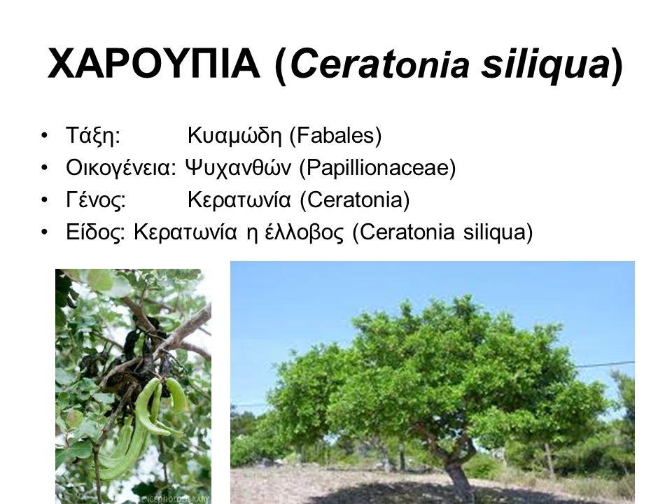Οικονομική σημασία Ευδοκιμεί σε ξηροθερμικές περιοχές (νότια Ελλάδα), όπου και αυτοφύεται: 58,4% στην Κρήτη, το υπόλοιπο νησιά Αιγαίου, Ιονίου, Ν.