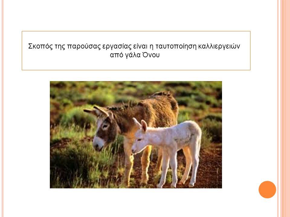 ΕΙΣΑΓΩΓΗ-ΓΕΝΙΚΑ ΣΤΟΙΧΕΙΑ O γάιδαρος, γάδαρος ή γαϊδούρι, στο θηλυκό γένος γαϊδάρα, γαδάρα ή γαϊδούρα και στην καθαρεύουσα όνος, είναι κατοικίδιο εξημερωμένο θηλαστικό ζώο που ανήκει στην τάξη περισσοδάκτυλα.