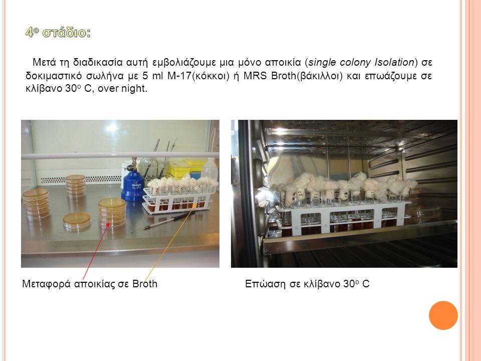 Μετά τη διαδικασία αυτή εμβολιάζουμε μια μόνο αποικία (single colony Isolation) σε δοκιμαστικό σωλήνα με 5 ml M-17(κόκκοι) ή MRS Broth(βάκιλλοι) και ε