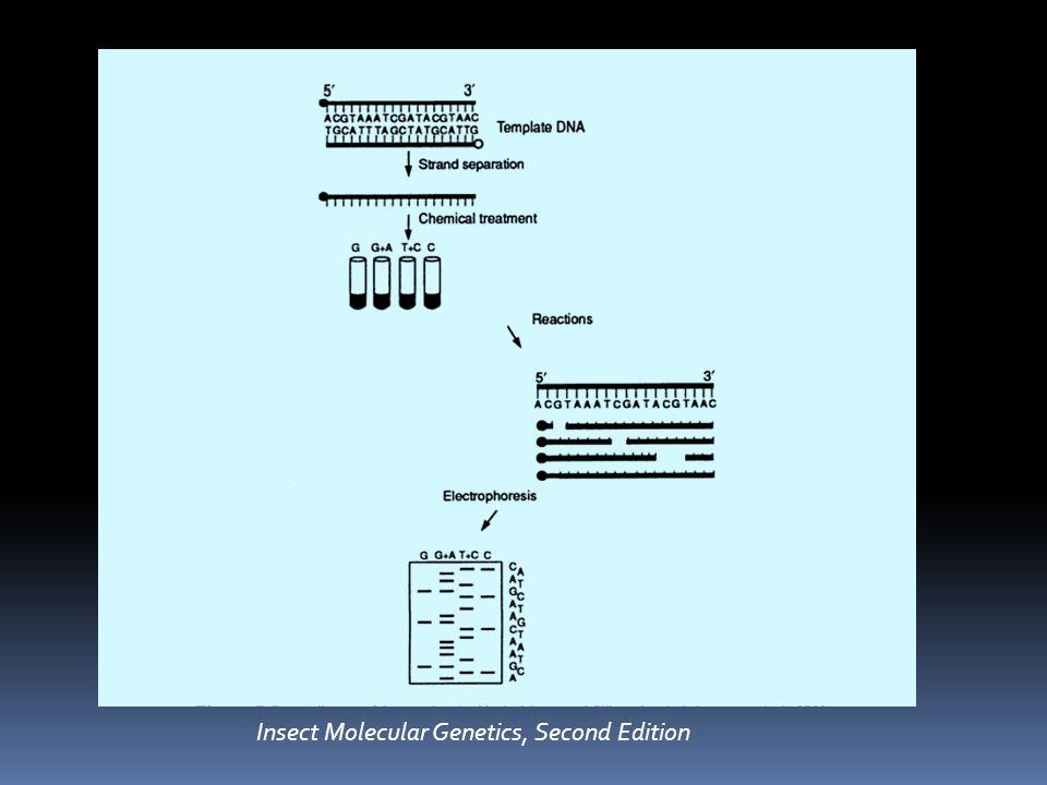 Κλασσική μέθοδος απαιτεί: Μονόκλωνο DNA Εκκινητές (primers) DNA πολυμεράση Τριφωσφορικά δεοξυριβονουκλεοτίδια (dNTPs) Τριφωσφορικά διδεοξυριβονουκλεοτίδια (ddNTPs) Κατάλληλο ρυθμιστικό διάλυμα httptml