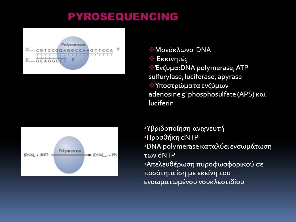  Μονόκλωνο DNA  Εκκινητές  Ένζυμα:DNA polymerase, ATP sulfurylase, luciferase, apyrase  Υποστρώματα ενζύμων adenosine 5 phosphosulfate (APS) και luciferin PYROSEQUENCING Υβριδοποίηση ανιχνευτή Προσθήκη dNTP DNA polymerase καταλύει ενσωμάτωση των dNTP Απελευθέρωση πυροφωσφορικού σε ποσότητα ίση με εκείνη του ενσωματωμένου νουκλεοτιδίου