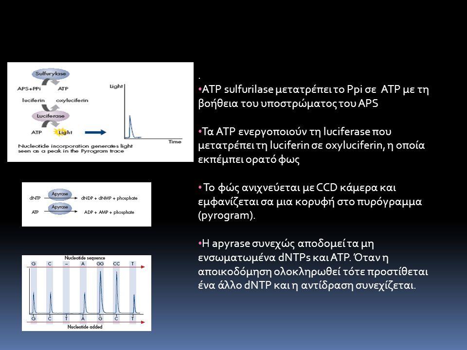 ATP sulfurilase μετατρέπει το Ppi σε ATP με τη βοήθεια του υποστρώματος του APS Τα ATP ενεργοποιούν τη luciferase που μετατρέπει τη luciferin σε oxyluciferin, η οποία εκπέμπει ορατό φως Το φώς ανιχνεύεται με CCD κάμερα και εμφανίζεται σα μια κορυφή στο πυρόγραμμα (pyrogram).