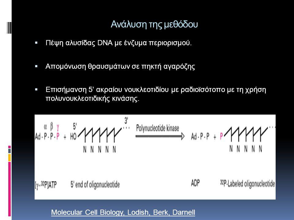 Πιο αναλυτικα: Κλωνοποίηση της υπό μελέτη περιοχής σε πλασμίδιο Κοπή με ένζυμα περιορισμού Θερμική αποδιάταξη του δίκλωνου DNA στους 96 Μείωση θερμοκρασίας για υβριδοποίηση εκκινητή Το δείγμα χωρίζεται σε 4 μέρη που περιέχουν: Και τα 4 dNTPs (dATP, dGTP, d CTP, d TTP) Εκκινητές DNA πολυμεράση
