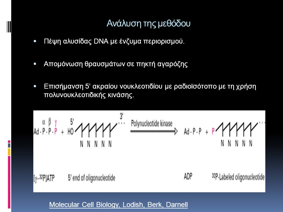 Molecular Biology, Philip C. Turner, Alexander McLennan, Andy Bates, Mike White - 2005 -