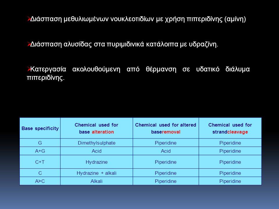  Διαχωρισμός σε πηκτή πολυακριλαμίδης  Έκθεση του ηλεκτροφορήματος σε φωτογραφική πλάκα.
