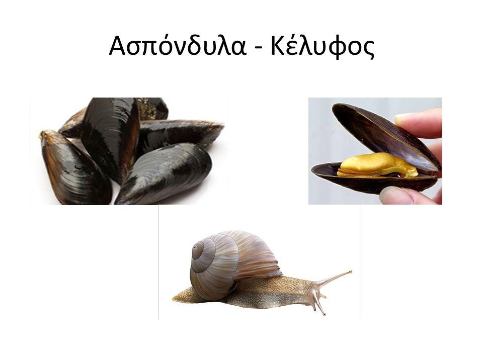 Ασπόνδυλα - Κέλυφος