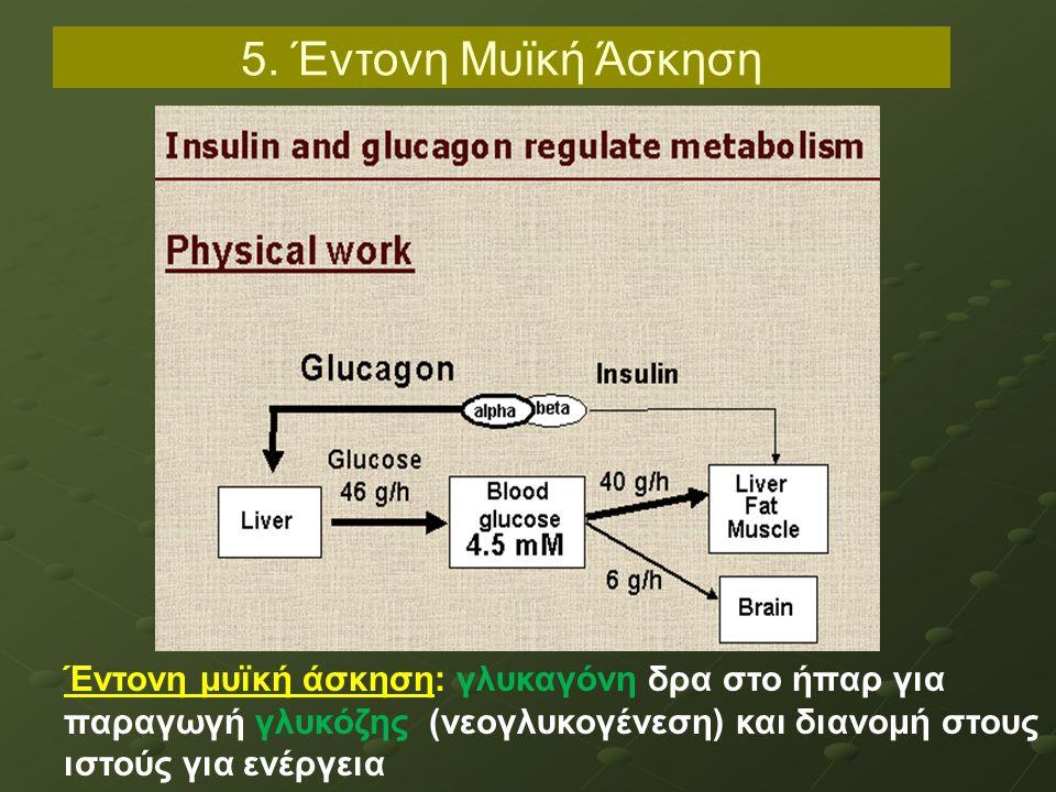 5. Έντονη Μυϊκή Άσκηση Έντονη μυϊκή άσκηση: γλυκαγόνη δρα στο ήπαρ για παραγωγή γλυκόζης (νεογλυκογένεση) και διανομή στους ιστούς για ενέργεια