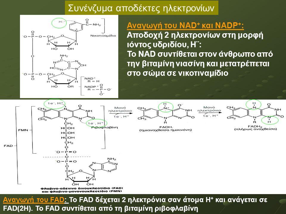 Συνένζυμα αποδέκτες ηλεκτρονίων Αναγωγή του ΝΑD + και NADP + : Αποδοχή 2 ηλεκτρονίων στη μορφή ιόντος υδριδίου, Η¨: Το ΝΑD συντίθεται στον άνθρωπο από την βιταμίνη νιασίνη και μετατρέπεται στο σώμα σε νικοτιναμίδιο Αναγωγή του FAD: Το FAD δέχεται 2 ηλεκτρόνια σαν άτομα Η + και ανάγεται σε FAD(2Η).