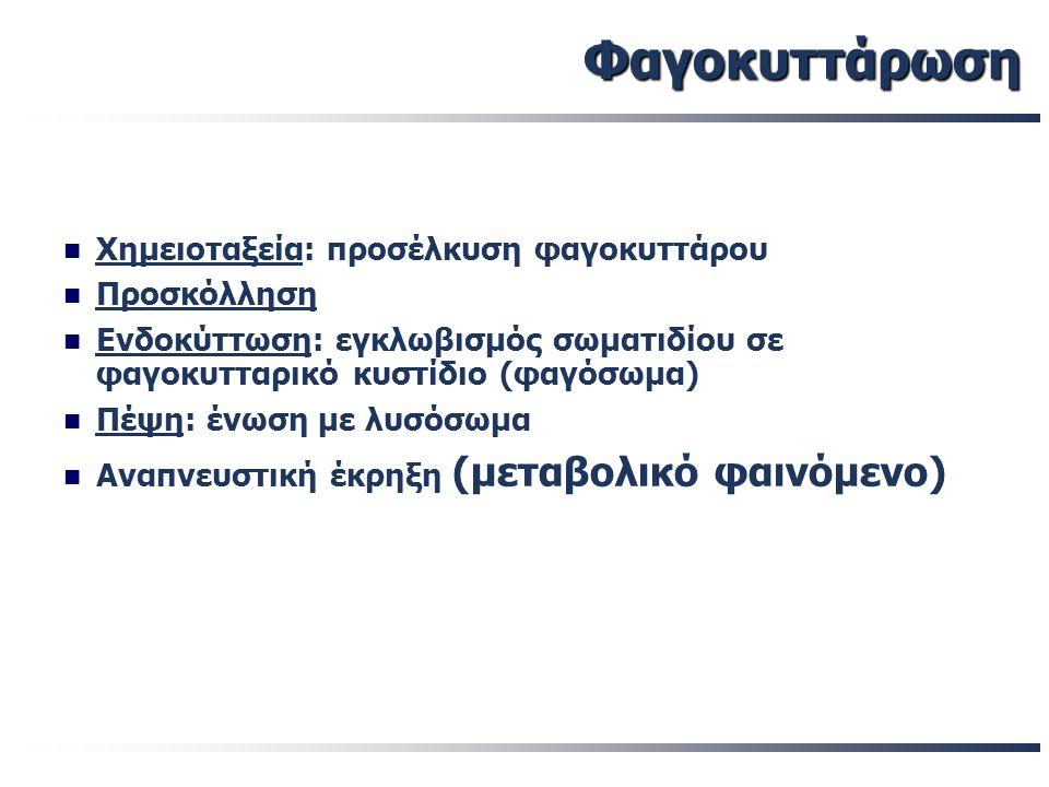 Φαγοκυττάρωση Χημειοταξεία: προσέλκυση φαγοκυττάρου Προσκόλληση Ενδοκύττωση: εγκλωβισμός σωματιδίου σε φαγοκυτταρικό κυστίδιο (φαγόσωμα) Πέψη: ένωση μ