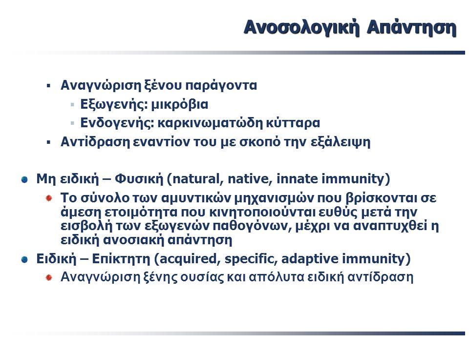 Ανοσολογική Απάντηση Ανοσολογική Απάντηση  Κύτταρα που συμμετέχουν Τ & Β-λεμφοκύτταρα  ειδικότητα «συνοδά» κύτταρα  χωρίς προηγούμενη ευαισθητοποίηση  φαγοκυττάρωση  λύση μικροοργανισμών  Μονοπύρηνα – μακροφάγα  Κύτταρα «Φυσικοί Φονείς» (ΝΚ)  Πολυμορφοπύρηνα  Δενδριτικά κύτταρα
