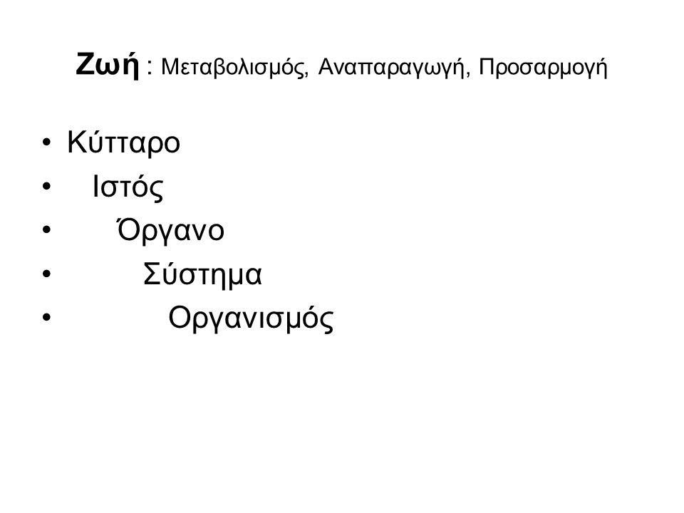 QUIZ 1 πλευρές - σπόνδυλοι Κεφαλή της πλευράς Φύμα της πλευράς Πλευρικό ημιγλήνιο Εγκάρσια γλήνη