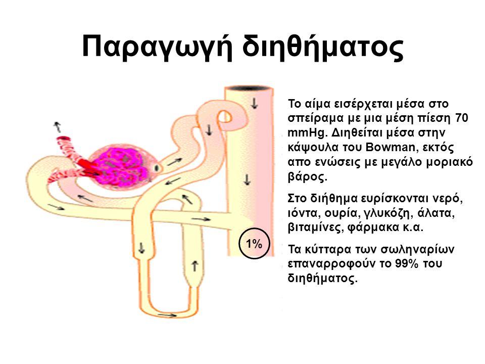 Παραγωγή διηθήματος Το αίμα εισέρχεται μέσα στο σπείραμα με μια μέση πίεση 70 mmHg.