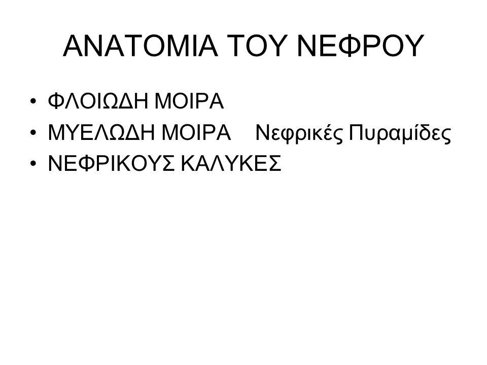 ΑΝΑΤΟΜΙΑ ΤΟΥ ΝΕΦΡΟΥ ΦΛΟΙΩΔΗ ΜΟΙΡΑ ΜΥΕΛΩΔΗ ΜΟΙΡΑ Νεφρικές Πυραμίδες ΝΕΦΡΙΚΟΥΣ ΚΑΛΥΚΕΣ
