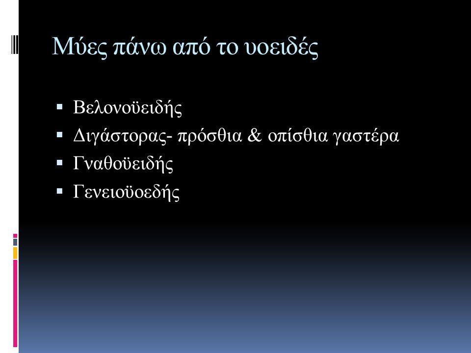 Μύες πάνω από το υοειδές  Βελονοϋειδής  Διγάστορας- πρόσθια & οπίσθια γαστέρα  Γναθοϋειδής  Γενειοϋοεδής