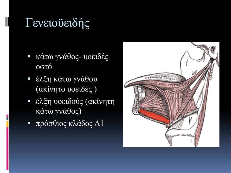 Γενειοϋειδής  κάτω γνάθος- υοειδές οστό  έλξη κάτω γνάθου (ακίνητο υοειδές )  έλξη υοειδούς (ακίνητη κάτω γνάθος)  πρόσθιος κλάδος Α1