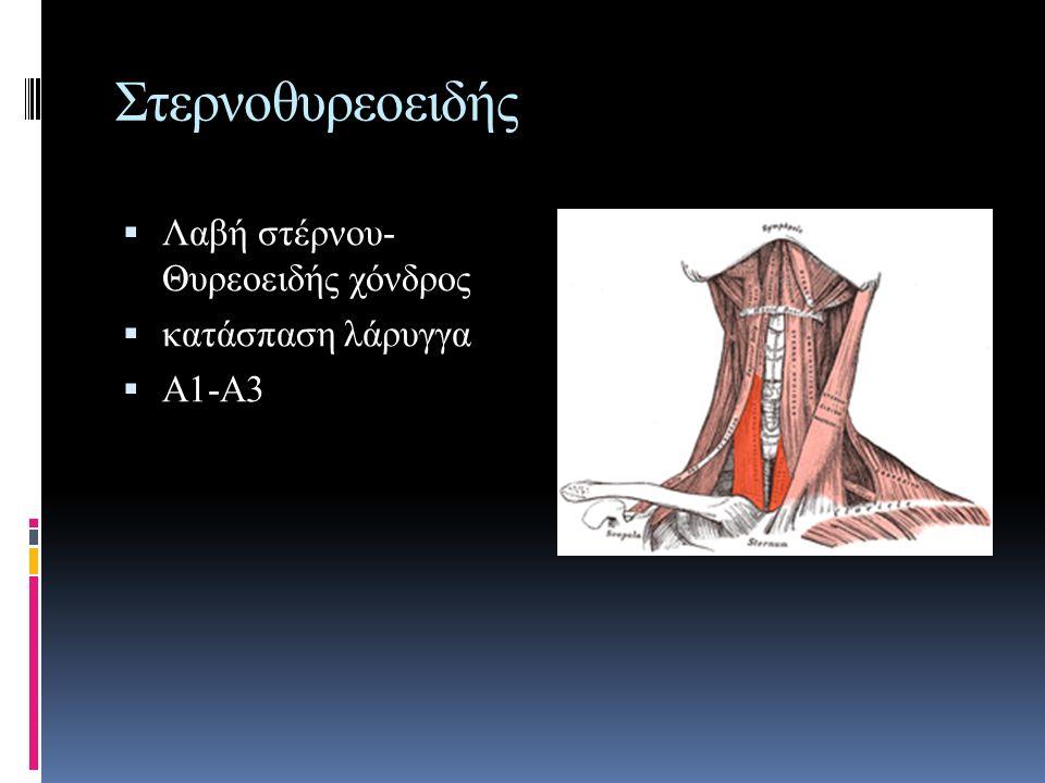 Στερνοθυρεοειδής  Λαβή στέρνου- Θυρεοειδής χόνδρος  κατάσπαση λάρυγγα  Α1-Α3