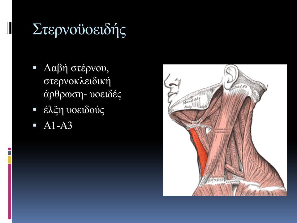 Στερνοϋοειδής  Λαβή στέρνου, στερνοκλειδική άρθρωση- υοειδές  έλξη υοειδούς  Α1-Α3