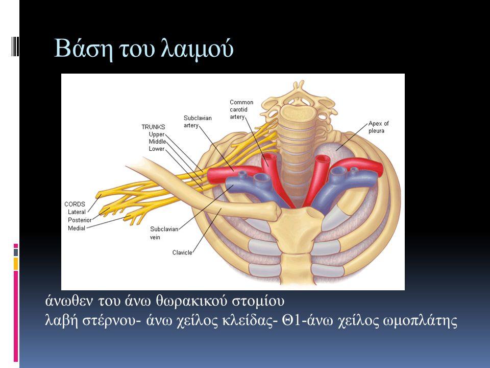 Βάση του λαιμού άνωθεν του άνω θωρακικού στομίου λαβή στέρνου- άνω χείλος κλείδας- Θ1-άνω χείλος ωμοπλάτης