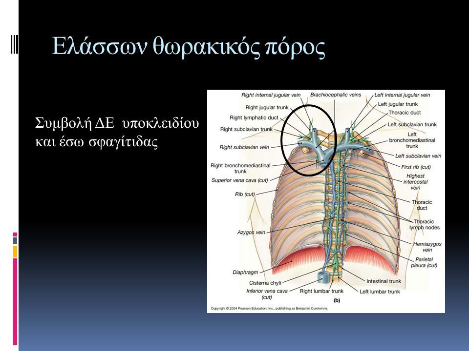 Ελάσσων θωρακικός πόρος Συμβολή ΔΕ υποκλειδίου και έσω σφαγίτιδας