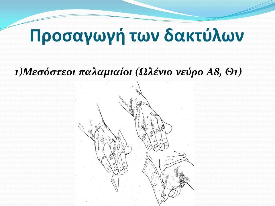 Προσαγωγή των δακτύλων 1)Μεσόστεοι παλαμιαίοι (Ωλένιο νεύρο Α8, Θ1)
