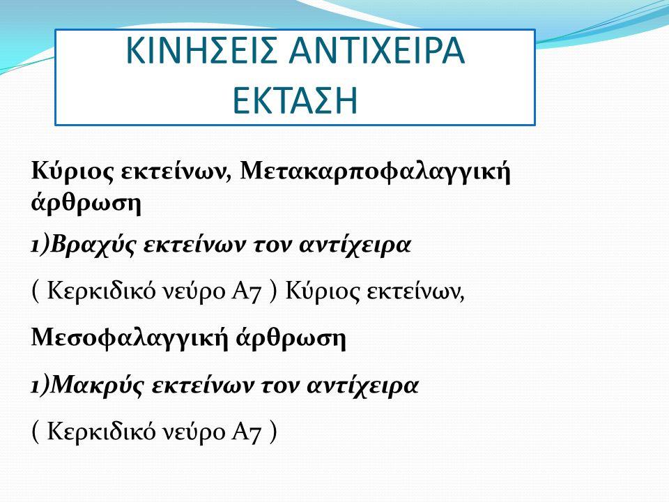 ΚΙΝΗΣΕΙΣ ΑΝΤΙΧΕΙΡΑ ΕΚΤΑΣΗ Κύριος εκτείνων, Μετακαρποφαλαγγική άρθρωση 1)Βραχύς εκτείνων τον αντίχειρα ( Κερκιδικό νεύρο Α7 ) Κύριος εκτείνων, Μεσοφαλαγγική άρθρωση 1)Μακρύς εκτείνων τον αντίχειρα ( Κερκιδικό νεύρο Α7 )