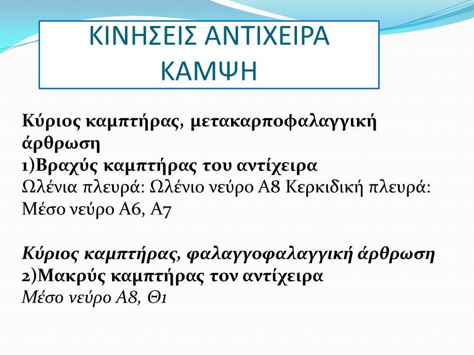 ΚΙΝΗΣΕΙΣ ΑΝΤΙΧΕΙΡΑ ΚΑΜΨΗ Κύριος καμπτήρας, μετακαρποφαλαγγική άρθρωση 1)Βραχύς καμπτήρας του αντίχειρα Ωλένια πλευρά: Ωλένιο νεύρο Α8 Κερκιδική πλευρά: Μέσο νεύρο Α6, Α7 Κύριος καμπτήρας, φαλαγγοφαλαγγική άρθρωση 2)Μακρύς καμπτήρας τον αντίχειρα Μέσο νεύρο Α8, Θ1