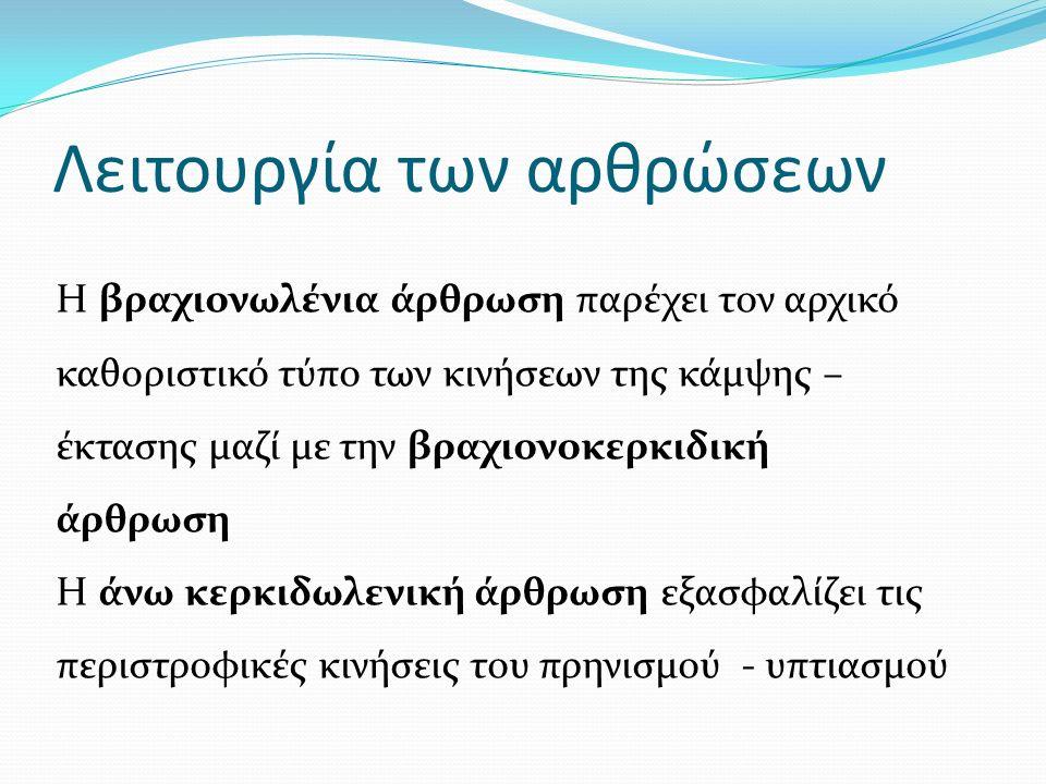 Λειτουργία των αρθρώσεων Η βραχιονωλένια άρθρωση παρέχει τον αρχικό καθοριστικό τύπο των κινήσεων της κάμψης – έκτασης μαζί με την βραχιονοκερκιδική άρθρωση Η άνω κερκιδωλενική άρθρωση εξασφαλίζει τις περιστροφικές κινήσεις του πρηνισμού - υπτιασμού