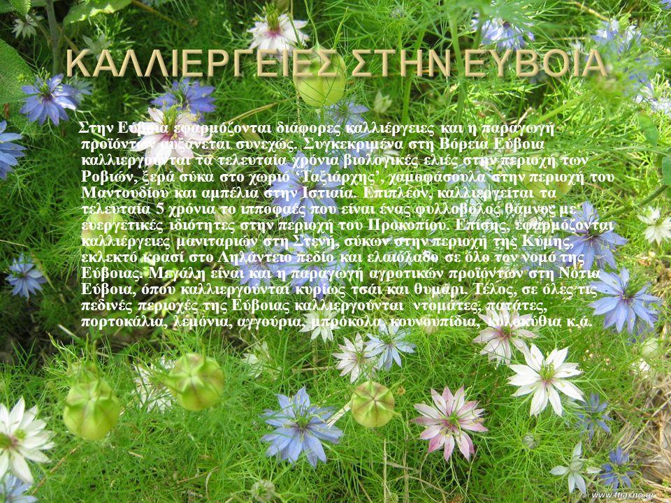 Στην Εύβοια εφαρμόζονται διάφορες καλλιέργειες και η παραγωγή προϊόντων αυξάνεται συνεχώς.
