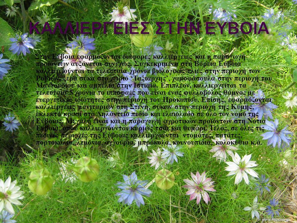 Στην Εύβοια εφαρμόζονται διάφορες καλλιέργειες και η παραγωγή προϊόντων αυξάνεται συνεχώς. Συγκεκριμένα στη Βόρεια Εύβοια καλλιεργούνται τα τελευταία