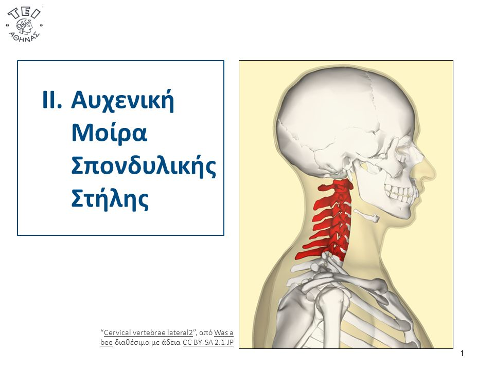 1 II.Αυχενική Μοίρα Σπονδυλικής Στήλης Cervical vertebrae lateral2 , από Was a bee διαθέσιμο με άδεια CC BY-SA 2.1 JPCervical vertebrae lateral2Was a beeCC BY-SA 2.1 JP