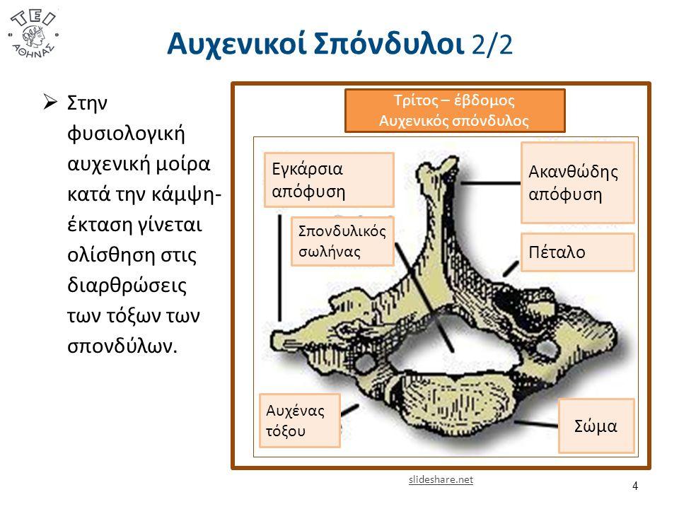 Αυχενικοί Σπόνδυλοι 2/2  Στην φυσιολογική αυχενική μοίρα κατά την κάμψη- έκταση γίνεται ολίσθηση στις διαρθρώσεις των τόξων των σπονδύλων.