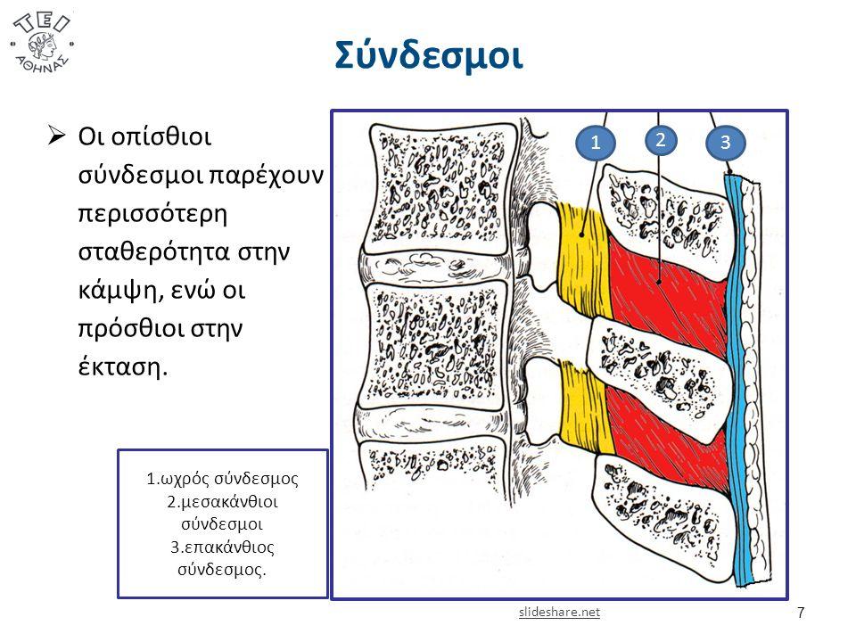 Σύνδεσμοι 7 1 2 3 1.ωχρός σύνδεσμος 2.μεσακάνθιοι σύνδεσμοι 3.επακάνθιος σύνδεσμος.