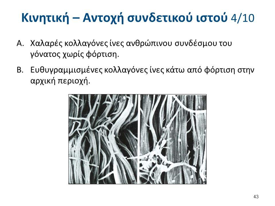 Κινητική – Αντοχή συνδετικού ιστού 4/10 A.Χαλαρές κολλαγόνες ίνες ανθρώπινου συνδέσμου του γόνατος χωρίς φόρτιση.