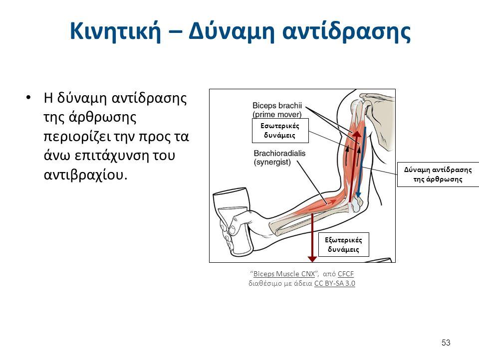 Κινητική – Δύναμη αντίδρασης Η δύναμη αντίδρασης της άρθρωσης περιορίζει την προς τα άνω επιτάχυνση του αντιβραχίου.