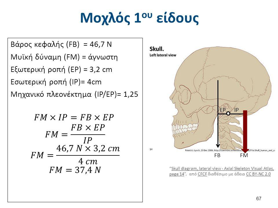 Μοχλός 1 ου είδους FΒFΒFΜFΜ ΕΡΙΡ Skull diagram, lateral view - Axial Skeleton Visual Atlas, page 14 , από CFCF διαθέσιμο με άδεια CC BY-NC 2.0Skull diagram, lateral view - Axial Skeleton Visual Atlas, page 14CFCFCC BY-NC 2.0 67