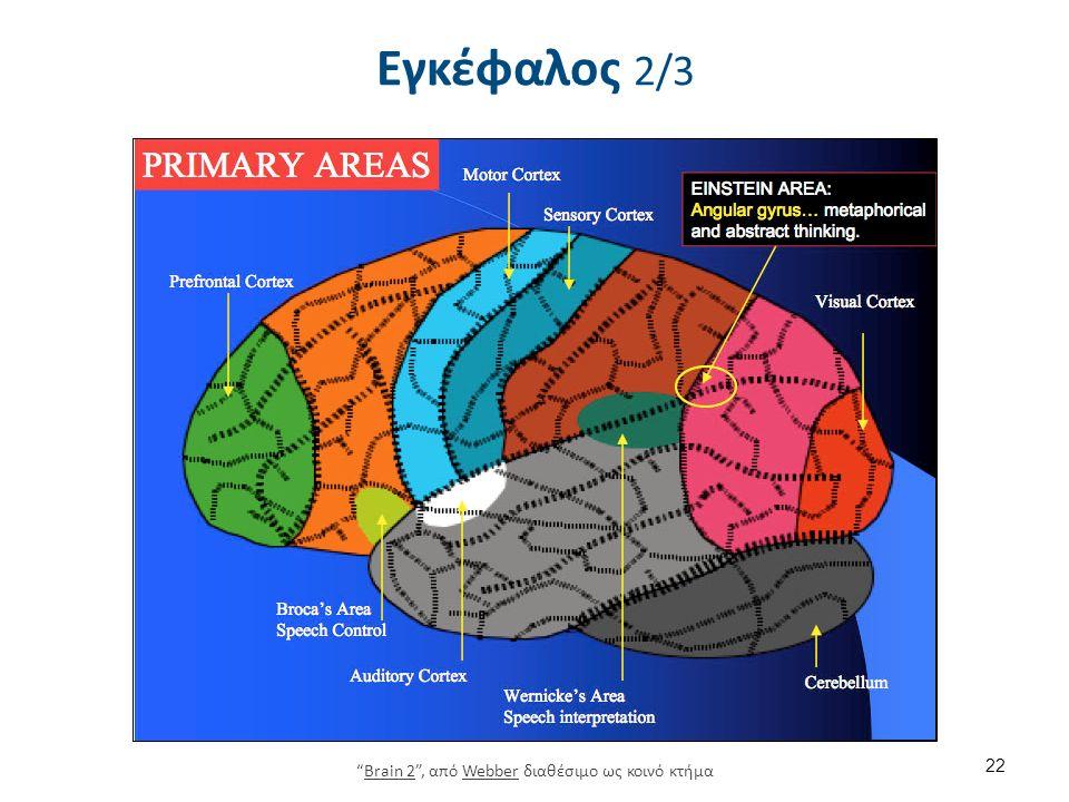 """Εγκέφαλος 2/3 22 """"Brain 2"""", από Webber διαθέσιμο ως κοινό κτήμαBrain 2Webber"""