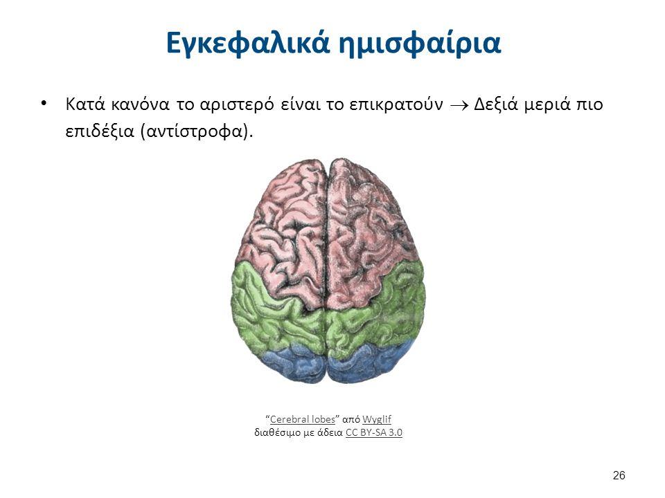 """Εγκεφαλικά ημισφαίρια Κατά κανόνα το αριστερό είναι το επικρατούν  Δεξιά μεριά πιο επιδέξια (αντίστροφα). 26 """"Cerebral lobes"""" από Wyglif διαθέσιμο με"""