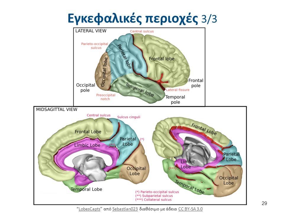 """Εγκεφαλικές περιοχές 3/3 29 """"LobesCapts"""" από Sebastian023 διαθέσιμο με άδεια CC BY-SA 3.0LobesCaptsSebastian023CC BY-SA 3.0"""