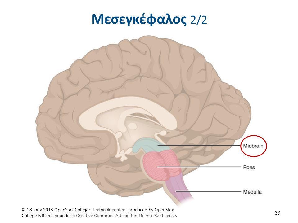 Μεσεγκέφαλος 2/2 33 © 28 Ιουν 2013 OpenStax College.
