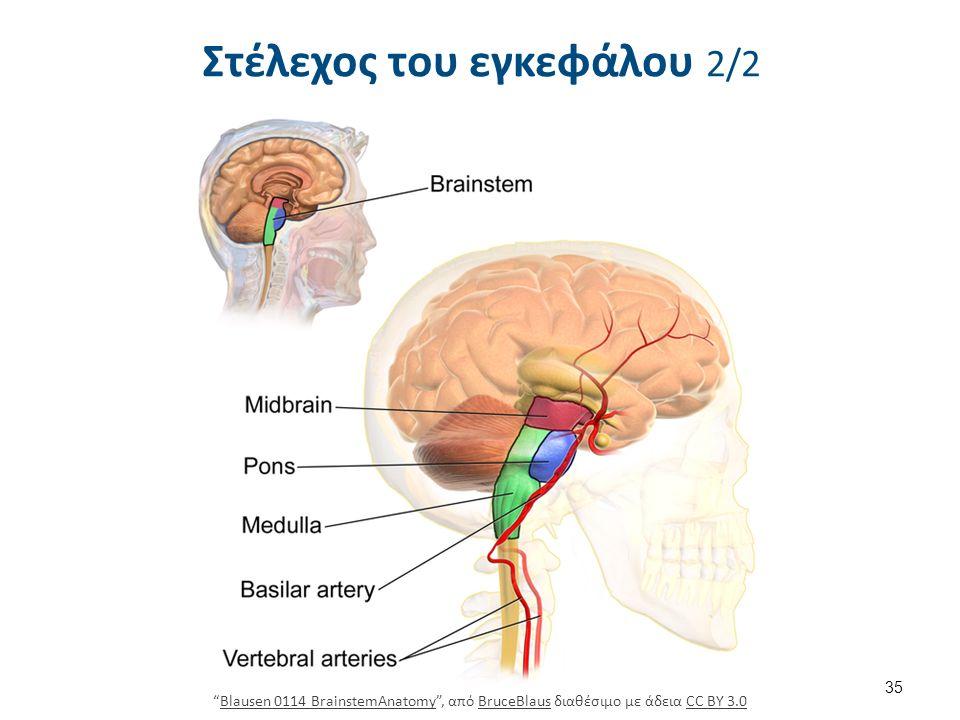 """Στέλεχος του εγκεφάλου 2/2 35 """"Blausen 0114 BrainstemAnatomy"""", από BruceBlaus διαθέσιμο με άδεια CC BY 3.0Blausen 0114 BrainstemAnatomyBruceBlausCC BY"""